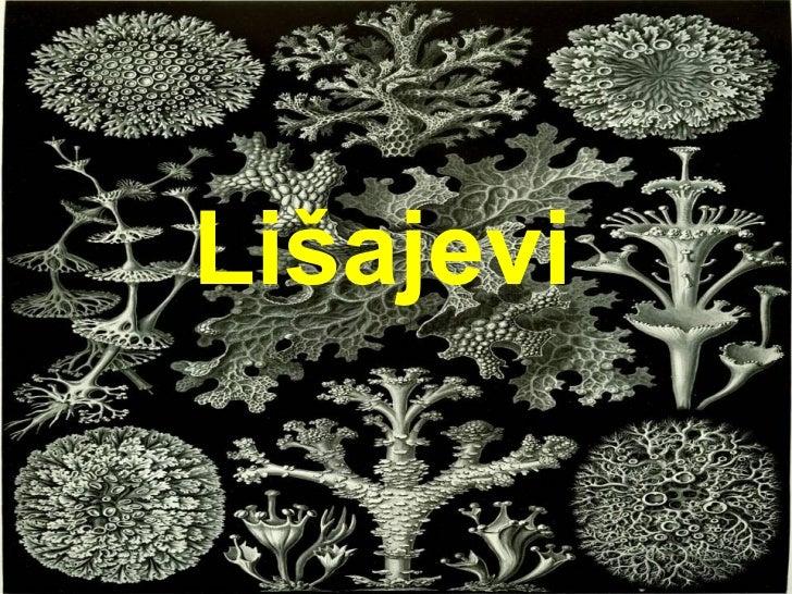 Lišajevi
