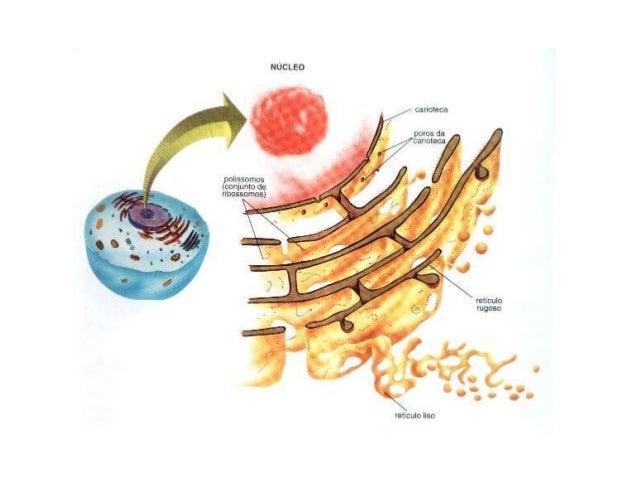 tipos de esteroides inyectables