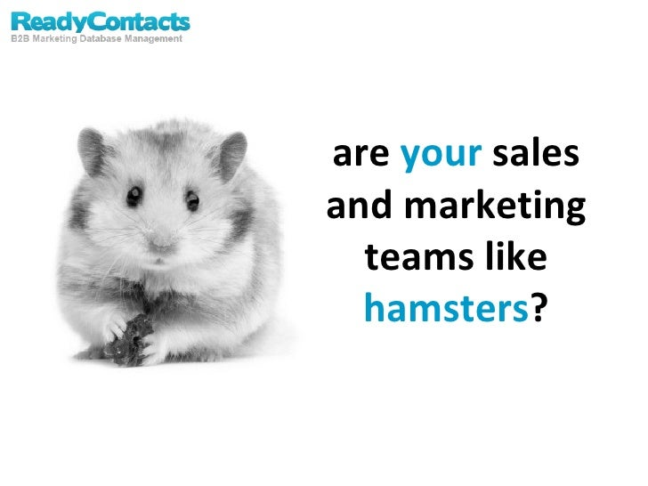 are  your  sales and marketing teams like  hamsters ?