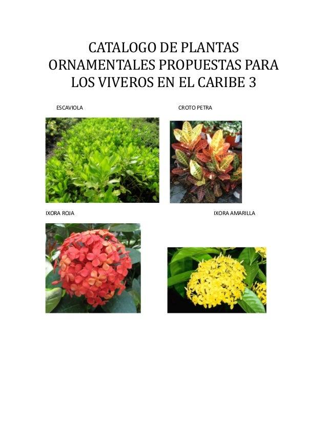 Listado de plantas con fotos for Plantas ornamentales croto
