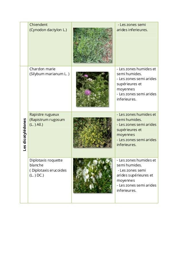 Liste des plantes adventices des céréales en tunisie