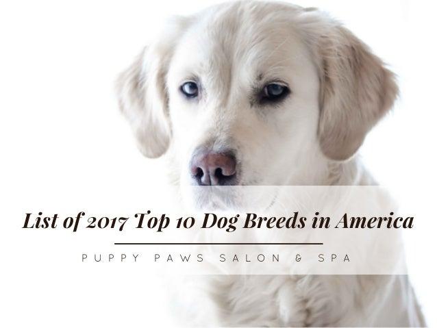 List of 2017 Top 10 Dog Breeds in America P U P P Y  P A W S  S A L O N  &  S P A