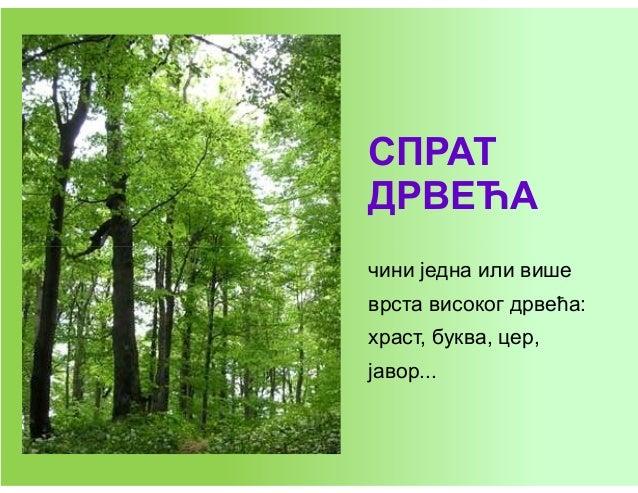 Listopadne šume - biljke Slide 3