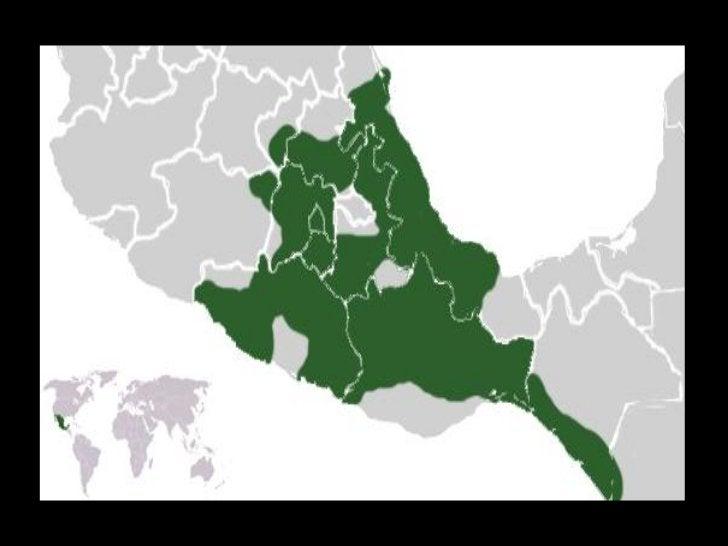 RELIGIÓN    Según lo expuesto por el estudioso Filiberto Romo Aguilar, en la concepción mesoamericana la materia se integr...