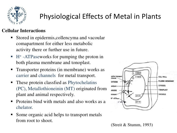 An introduction to the heavy metals and their uptake by plants