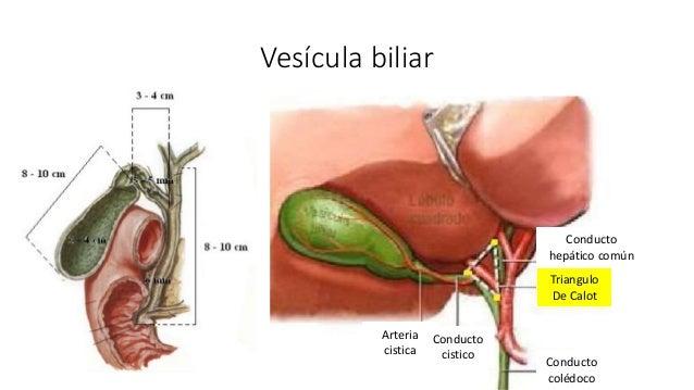 LITIASIS BILIAR. Cólico biliar, Colecistitis Aguda.