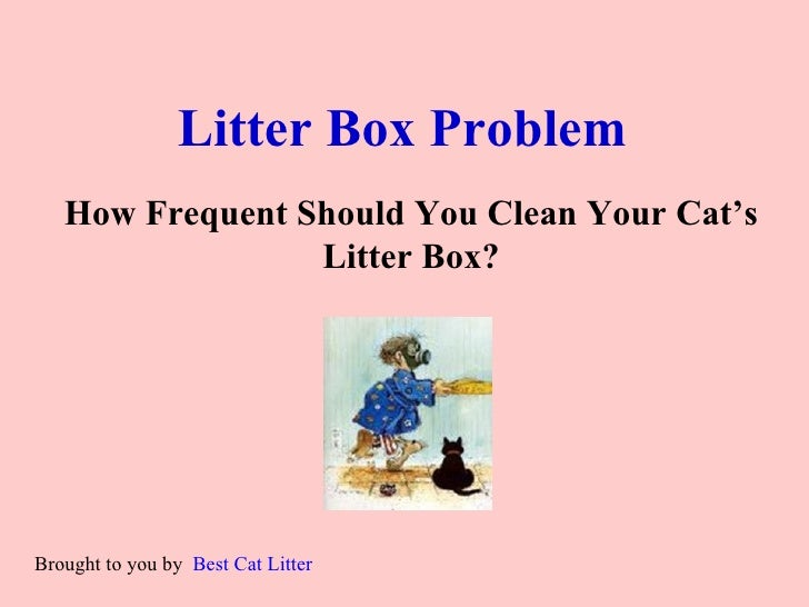 Litter Box Problem   How Frequent Should You Clean Your Cat's Litter Box?