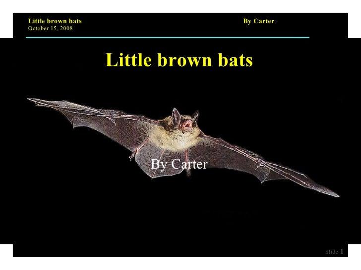 Little brown bats By Carter
