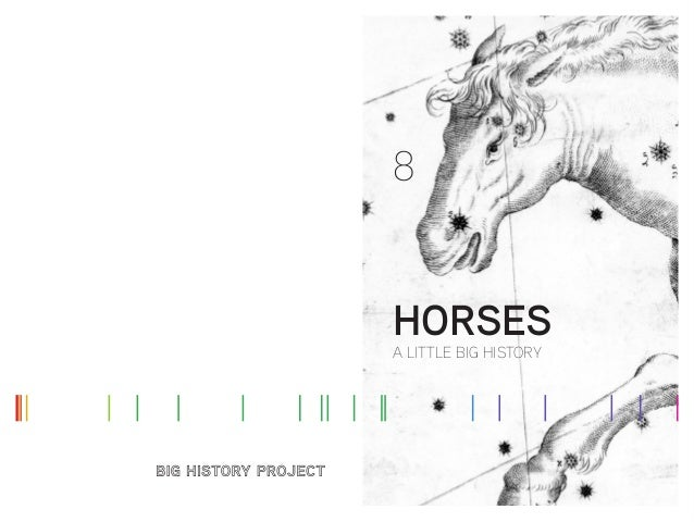 8 A LITTLE BIG HISTORY HORSES