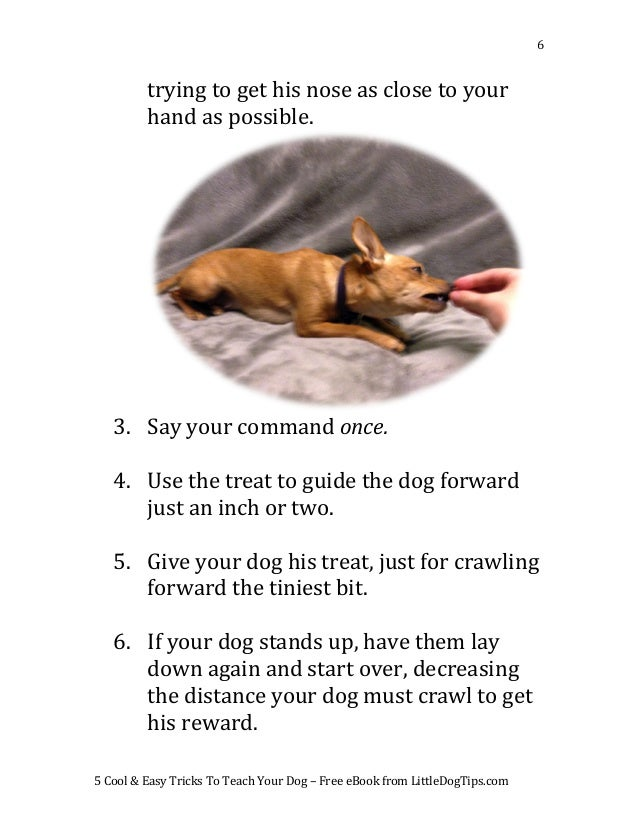 Teach Your Four Year Old To Read: 5 Cool & Easy Tricks To Teach Your Dog