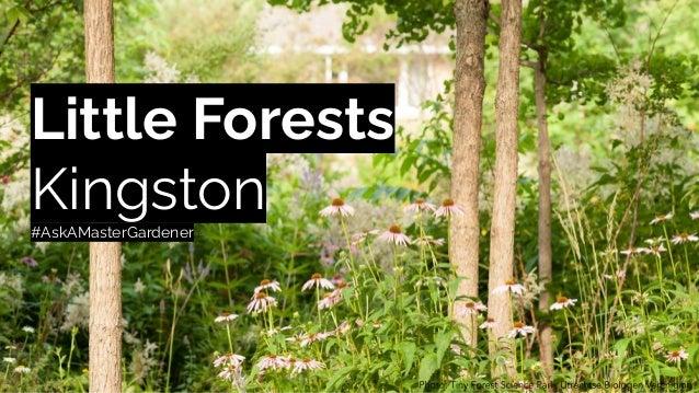 Little Forests Kingston #AskAMasterGardener