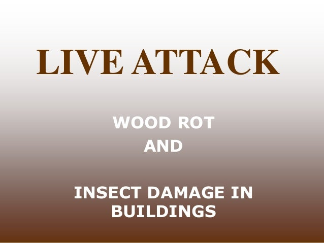 LIVE ATTACK WOOD ROT AND INSECT DAMAGE IN BUILDINGS