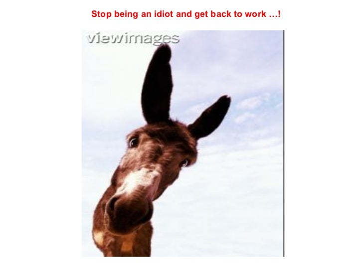 Stop being an idiot and get back to work …!