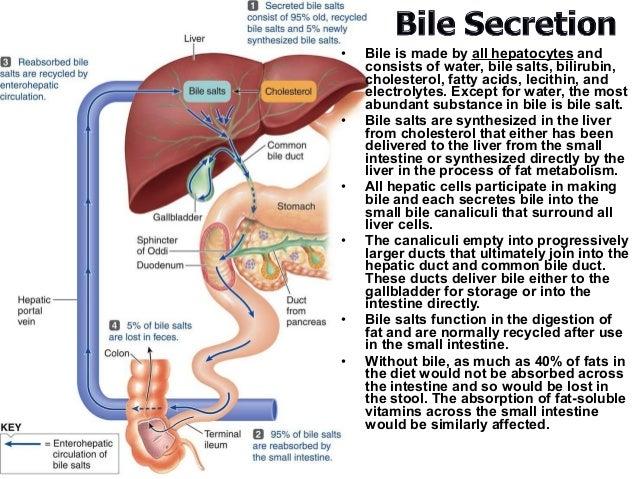 Pathophysiology of liver