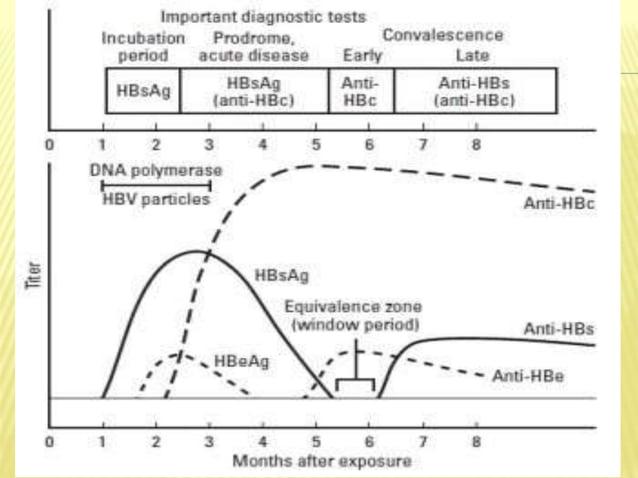 Indirect hepatotoxicity: - Interference with metabolic pathway  Cytotoxic damage: Degeneration or Necrosis of hepatocytes...