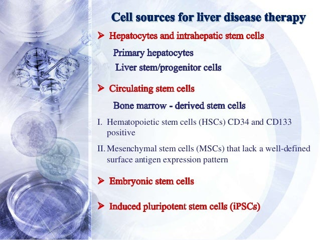Liver Stem Cell