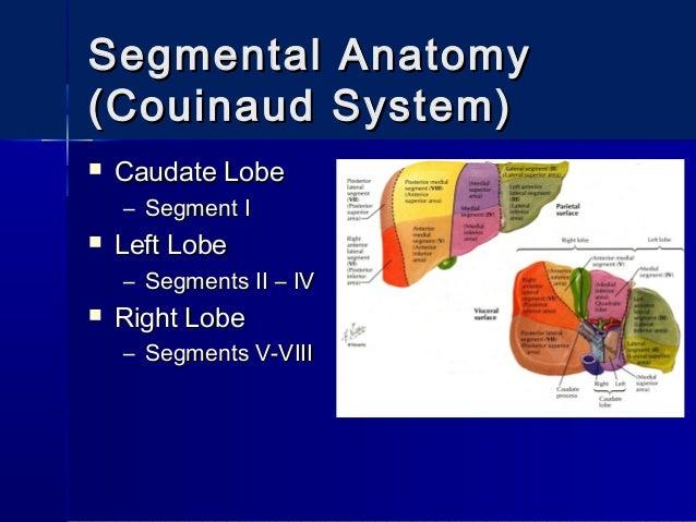 Surgical Anatomy of the Liver : Ηepatectomies - Dimitris P. Korkolis