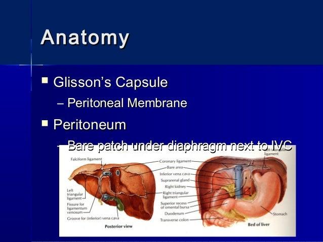 Surgical Anatomy Of The Liver Epatectomies Dimitris P Korkolis
