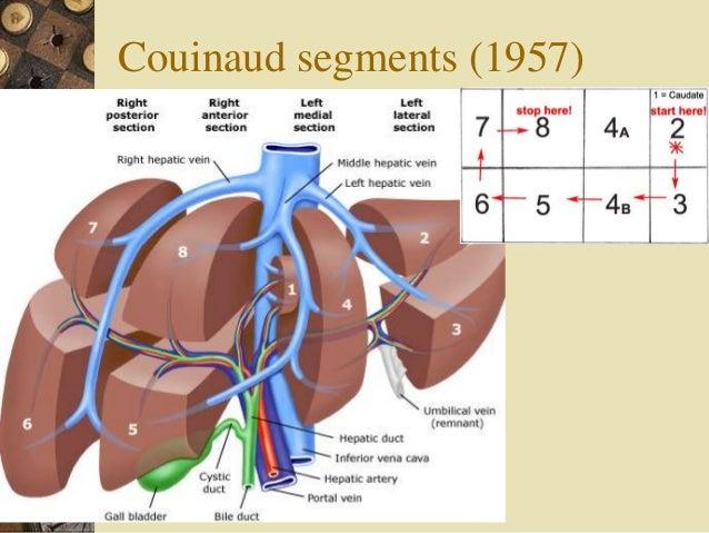 Liver anatomy - history, lobes, segments (by Armata manus)