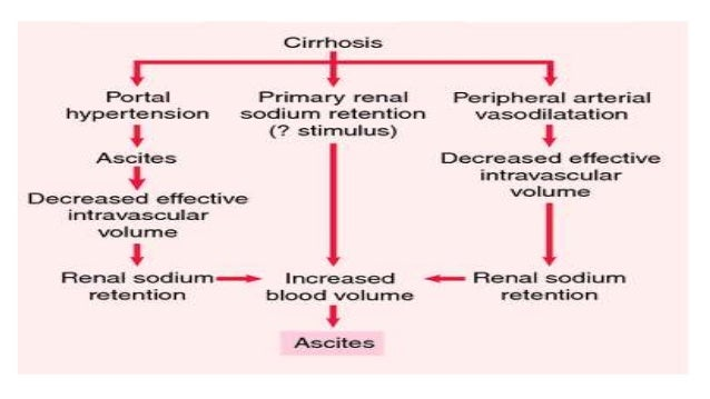 Pathophysiology of liver cirrhosis and alcholoic liver disease