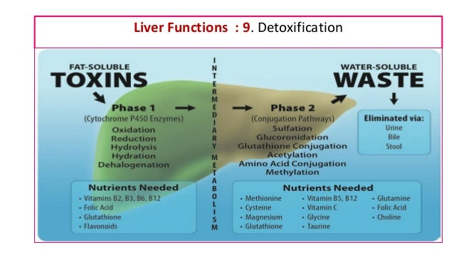 Liver Function Tests And Their Clinical Applications