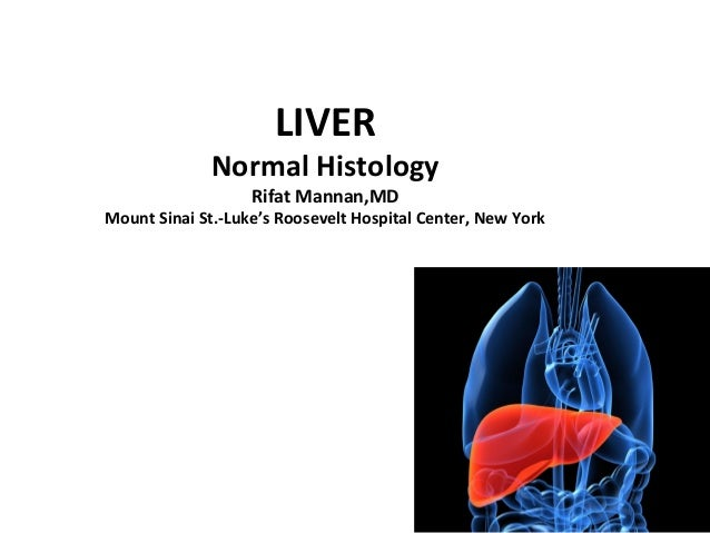 Histology Of Normal Liver