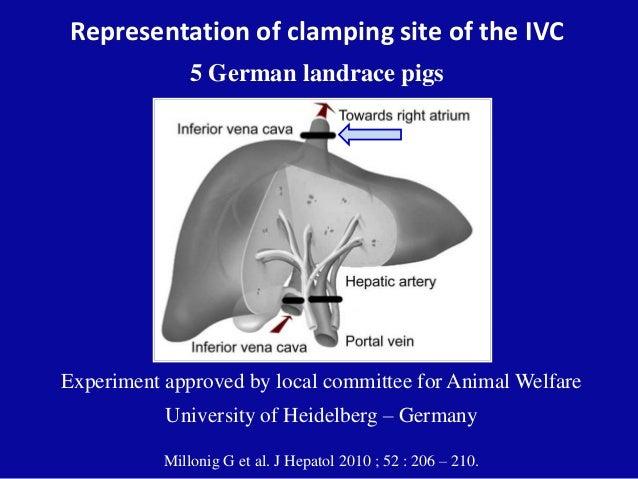 Representation of clamping site of the IVC 5 German landrace pigs Millonig G et al. J Hepatol 2010 ; 52 : 206 – 210. Exper...