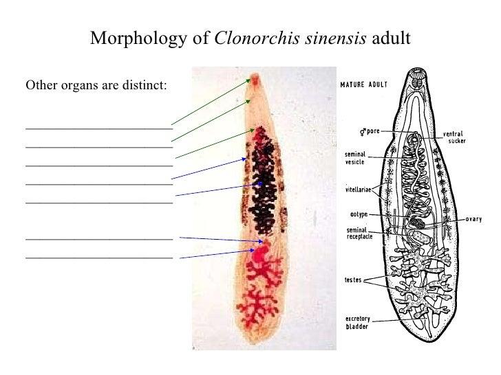 Liver Trematodes