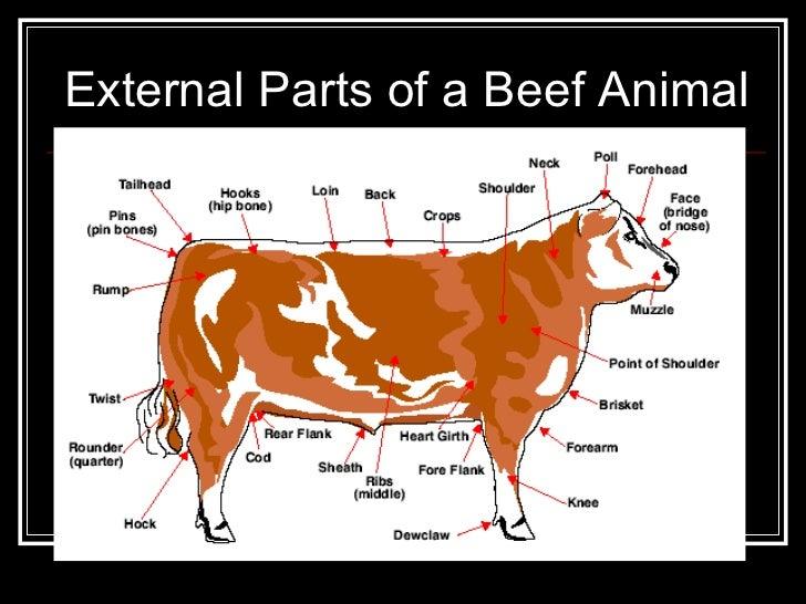 Livestock 6 728gcb1326450071