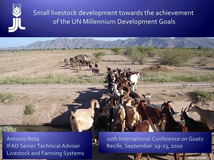 Small livestock development towards the achievement  of the UN Millennium Development Goals Antonio Rota IFAD Senior Techn...
