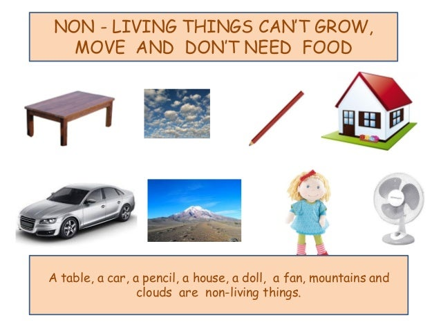Living and non living things for Living things found in soil