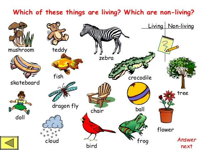 Worksheets Living Vs Nonliving Worksheet living and non things powerpoint 1 living