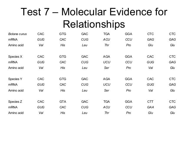 Test 7 – Molecular Evidence for Relationships Botana curus CAC GTG GAC TGA GGA CTC CTC mRNA GUG CAC CUG ACU CCU GAG GAG Am...