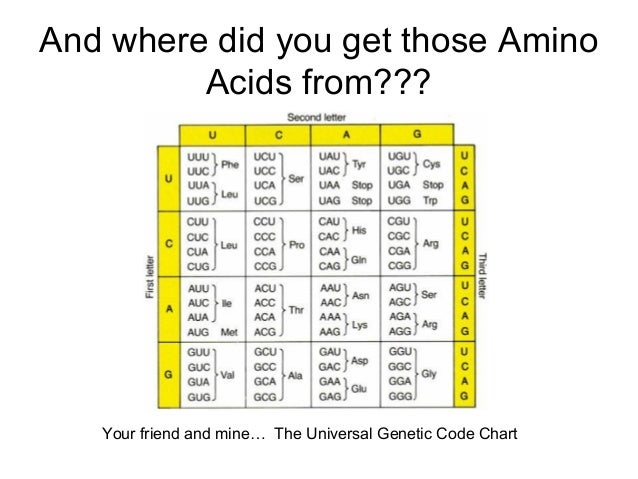And where did you get those Amino Acids from??? Your friend and mine… The Universal Genetic Code Chart