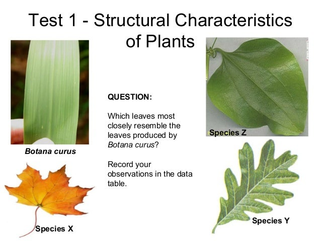 Test 1 - Structural Characteristics of Plants Species Y Species Z Species X Botana curus QUESTION: Which leaves most close...