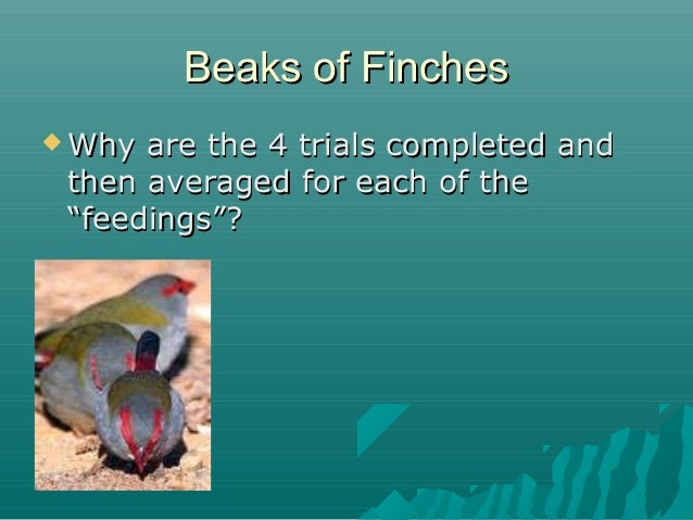 """Beaks of Finches  Why  are the 4 trials completed and then averaged for each of the """"feedings""""?"""