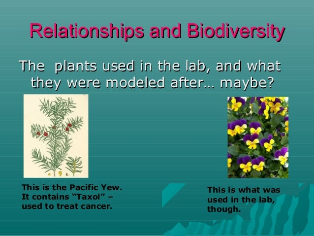 Relationships and Biodiversity The plants used in the lab, and what they were modeled after… maybe?  This is the Pacific Y...