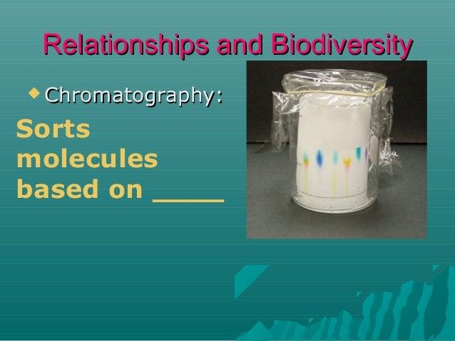 Relationships and Biodiversity  Chromatography:  Sorts molecules based on ____