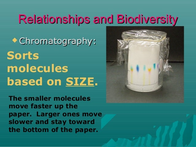 Relationships and Biodiversity  Chromatography:  Sorts molecules based on SIZE. The smaller molecules move faster up the ...
