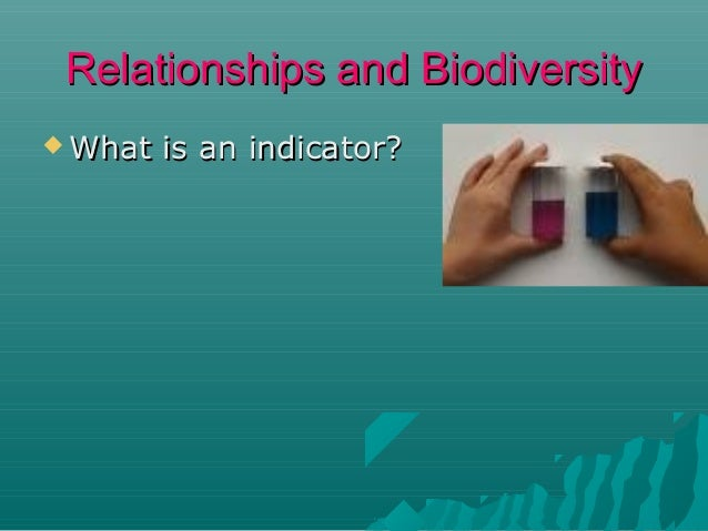 Relationships and Biodiversity  What  is an indicator?
