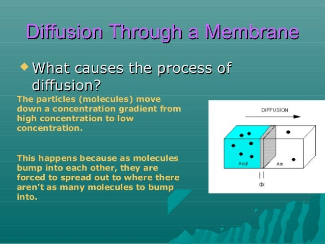 Diffusion Through a Membrane  If  certain molecules encounter membranes with pores, what can happen?