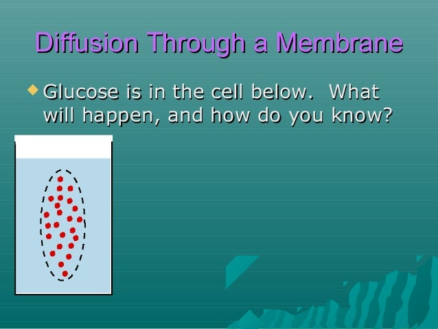 Diffusion Through a Membrane  Glucose  is in the cell below. What will happen, and how do you know?  When we test the out...