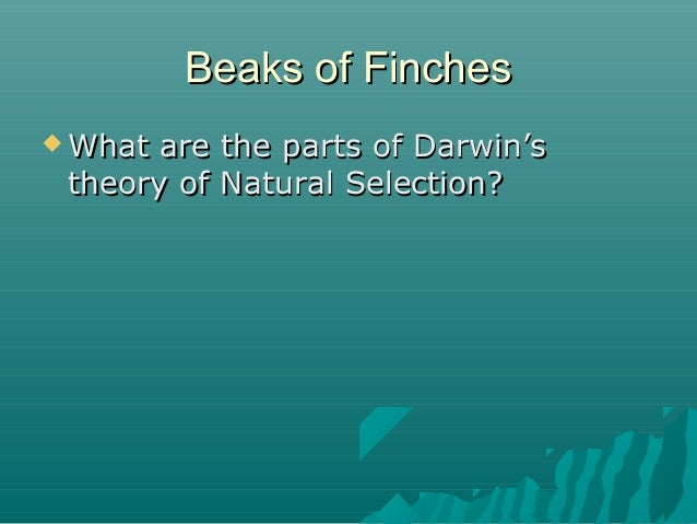 Beaks of Finches  What  are the parts of Darwin's theory of Natural Selection?
