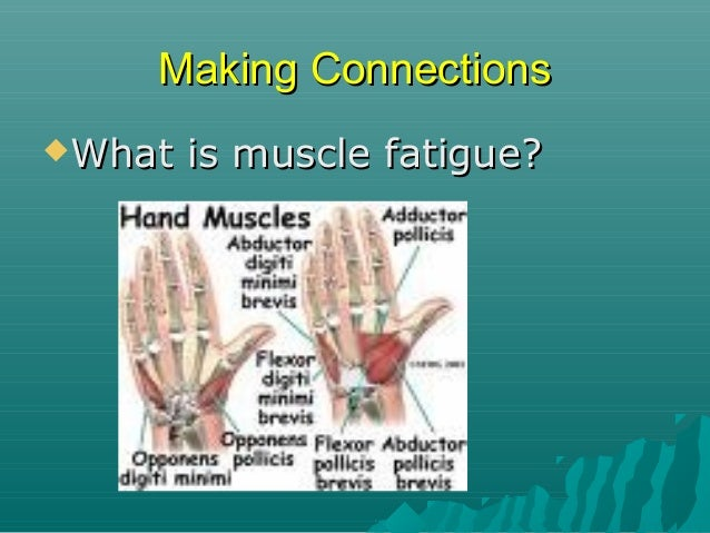 """Making Connections What  is muscle fatigue?  The """"tiring"""" of the muscles through overexertion."""