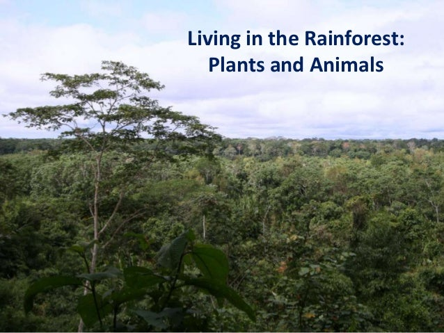 Living in the Rainforest:   Plants and Animals