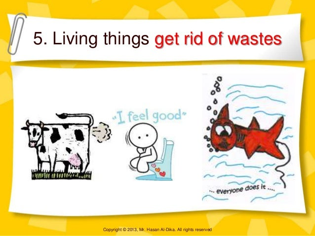 Living non living things for How to get rid of things