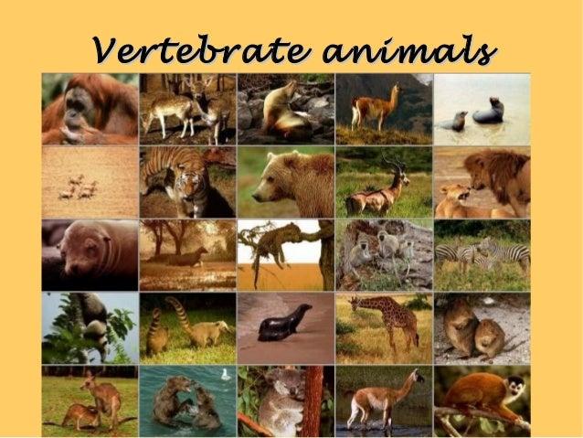 Vertebrate animalsVertebrate animals