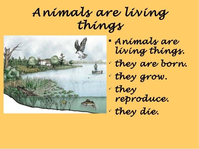 Living things Slide 2