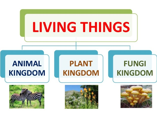 Living Things Kingdoms on Is It A Living Thing Worksheet