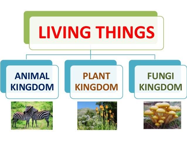 3 Living Things Animal Kingdom